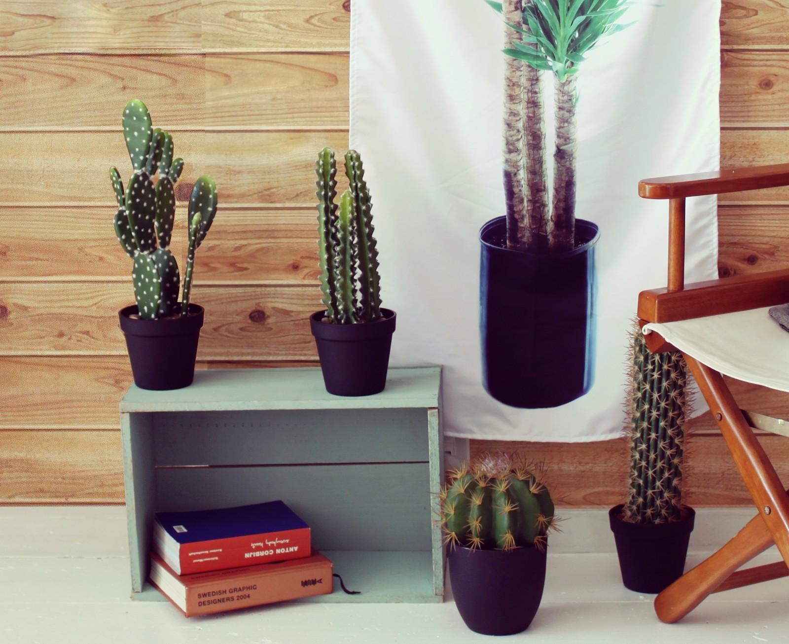 /Recipiente para Especias Puckator Cactus/ 3/Unidades para Alimentos, Color Naranja//Verde//p/úrpura